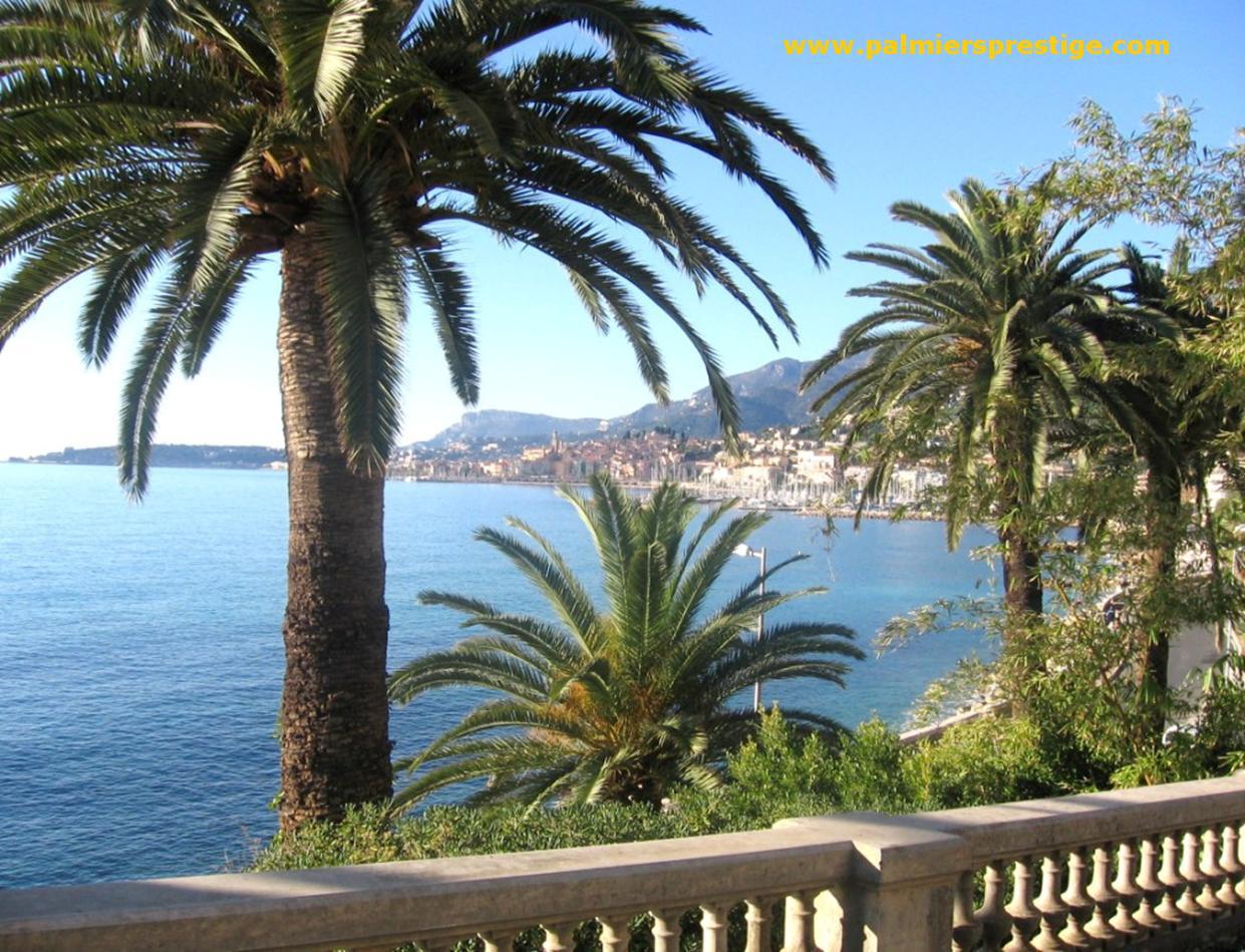 Palmiers prestige vente de palmiers et cocotiers d - Image palmier ...
